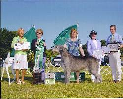 Merlin Wins BIS at HRVHA Show