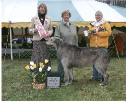 Timmy winning Veteran Dog at the PVIWC Specialty